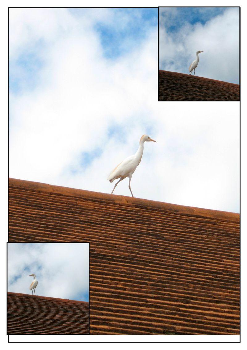 Stork on a stroll