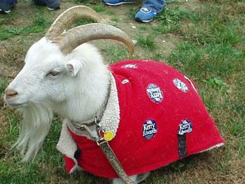 Goat_2